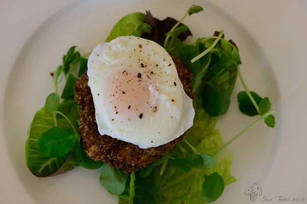 Craster Kipper Fishcakes served on a bed of leaves with a poached egg. © Sue Todd 2014.