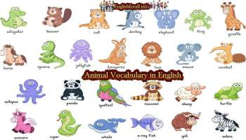 Colour Vocabulary in English