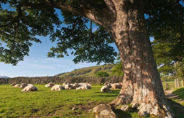 Langtons use Oak from the Lake District