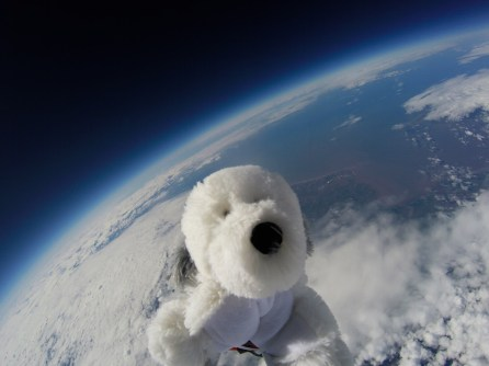 Sam the dog on the edge of Space