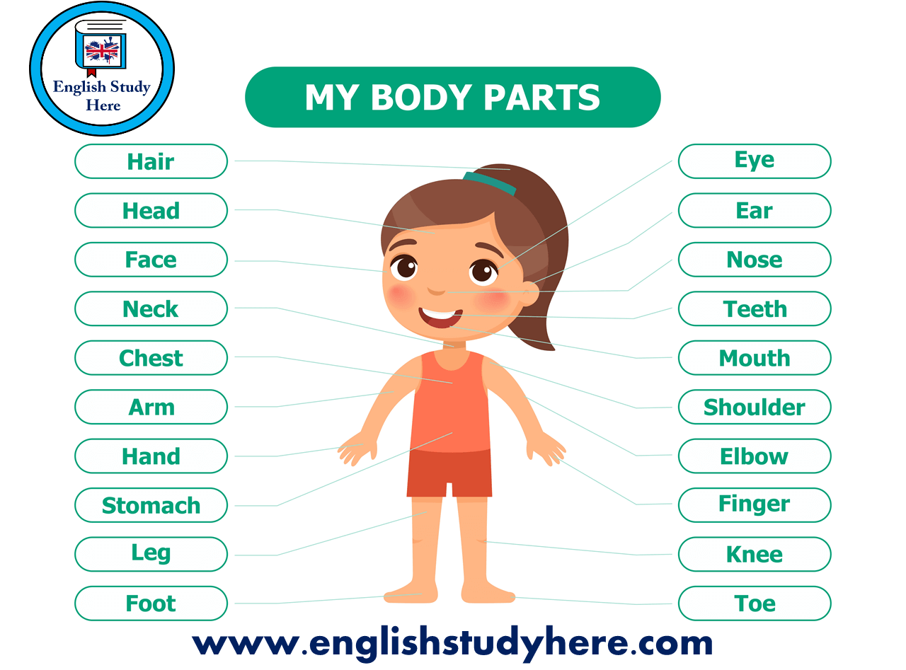 My Body Parts Names In English