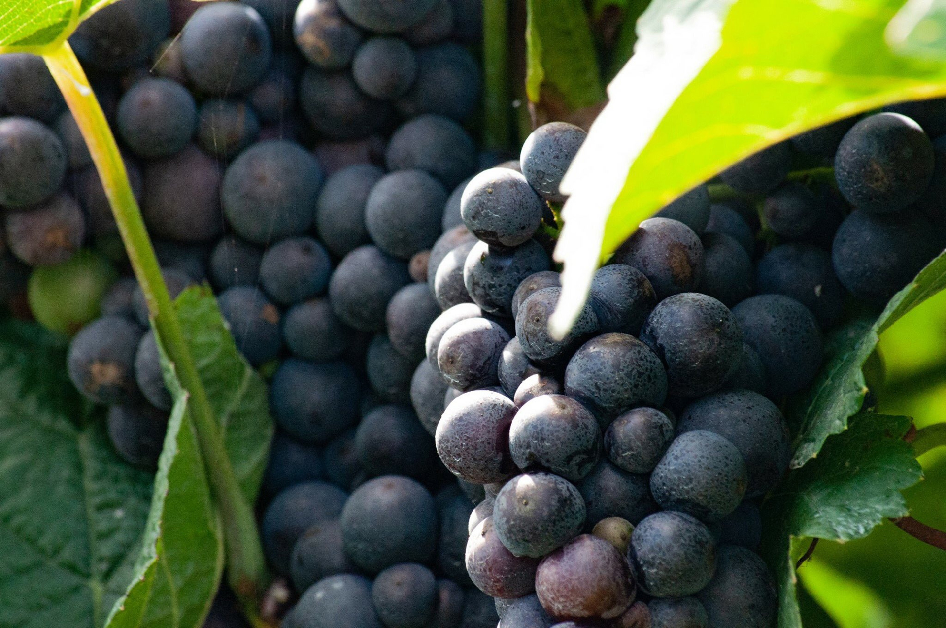 English Wines .info