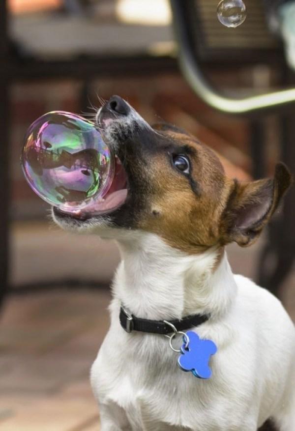Куче с балон в устата