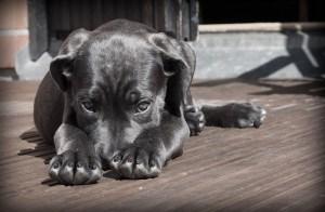 Черно куче