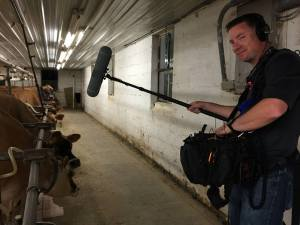 Sound Recordist, Matt Langley Recording the Sounds of Cows