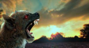 Chupacabra: Záhadné zvíře a otázka jeho existence