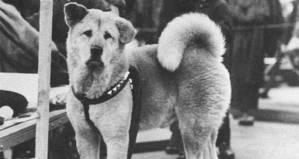 Hachiko: Příběh psí věrnosti, která trvala až za hrob