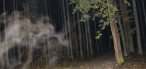 Branišovský les: Svědectví o levitujícím muži