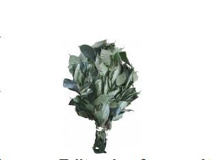 Editan leaf