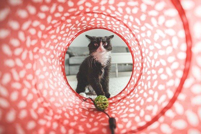 un chat est attiré dans un tunnel par un jouet attrayant comme le prospect l'est dans un tunnel de vente
