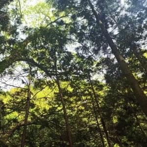 【小川と森林のキャンプ場】大阪「渓流園地」が最高過ぎる