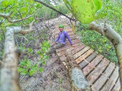 Mangrove Kampung Terih