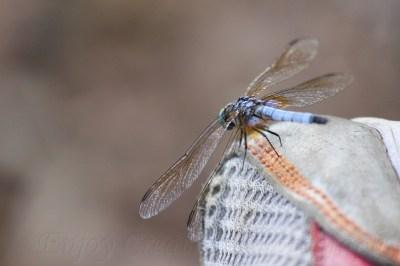 Hello, Dragonfly