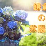 6/8プレバト俳句・お題は「鎌倉の紫陽花」名人梅沢撃沈の回・夏井先生に「何でそこ座ってるの?」と言われました!