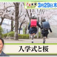 3/29プレバト俳句・お題は「入学式と桜」千原ジュニアは昇格できるか?