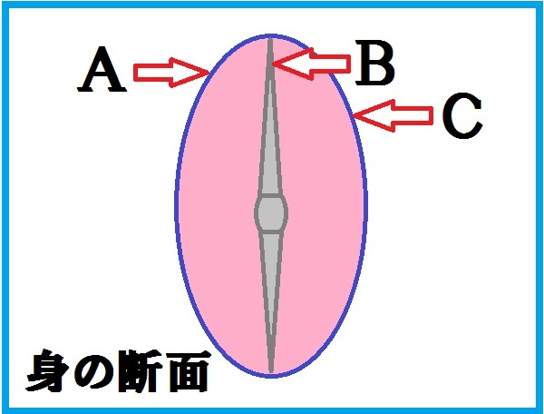 魚 捌き方 三枚おろし 断面図1
