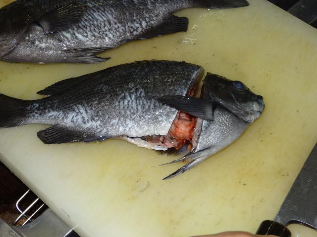 メジナ 捌き方 魚 三枚おろし
