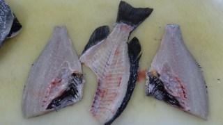 メジナ 3枚おろし 魚 捌き方
