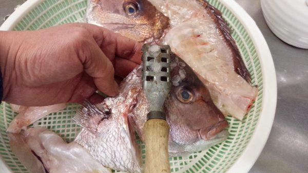 鯛づくし 鯛のかぶと焼き 仕込み