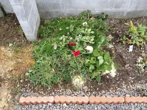 堆肥作り06雑草やバラの花柄をひく
