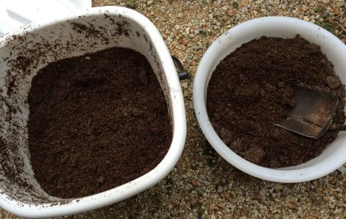 手作り油肥5日後003
