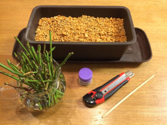 バラの挿し穂と道具