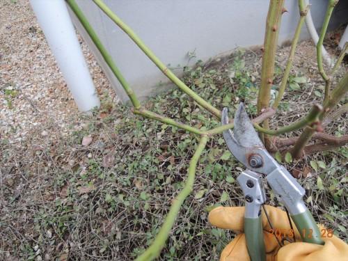 細めの枝を切る1