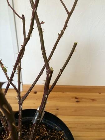 分岐した枝をカット2
