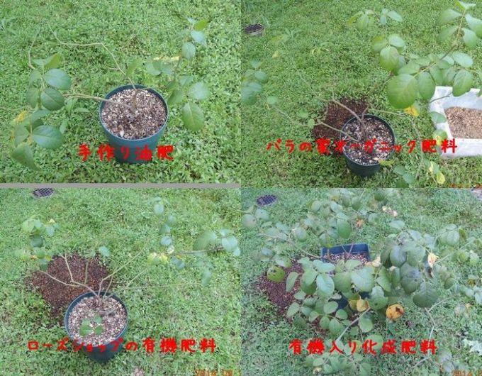 葉っぱの比較