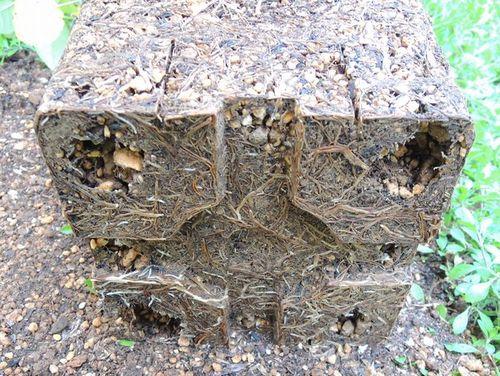 有機入り化成肥料の根鉢2