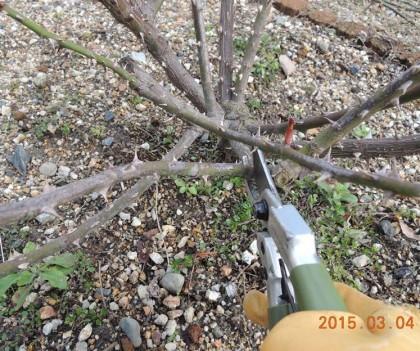 太い枝を切る