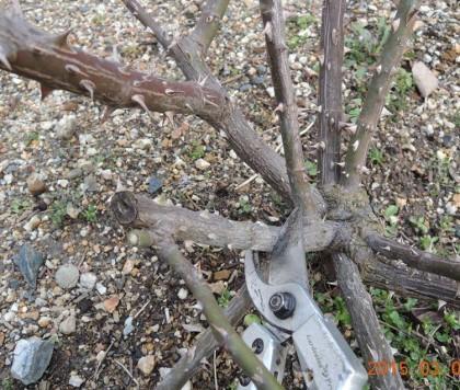 極太の枝を切る