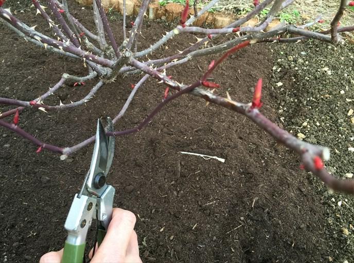 重なる枝を切る