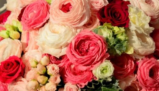 母の日に何を贈る?プレゼントにはバラの鉢植えがおすすめ!