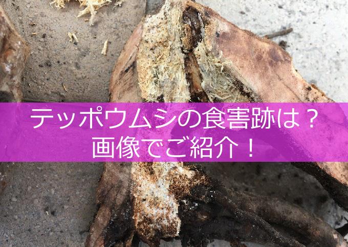 バラ!テッポウムシの食害の跡-01