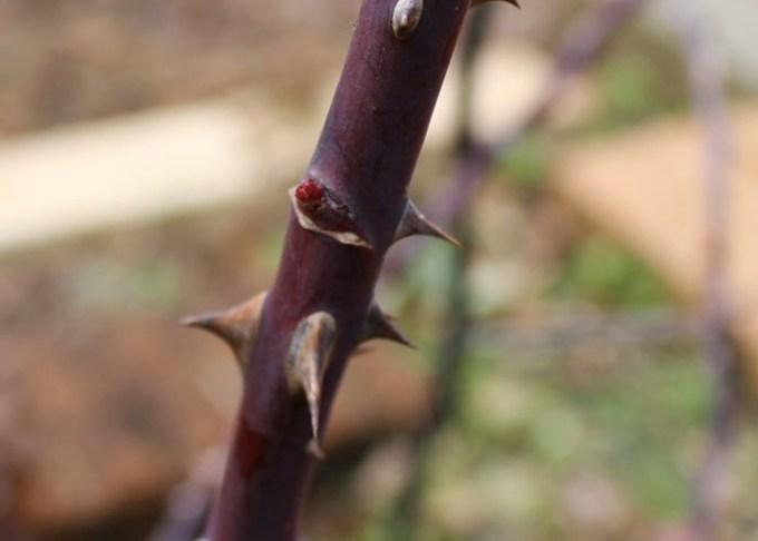 埋もれている芽2