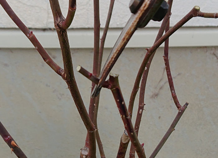 32細い枝はやはり切る