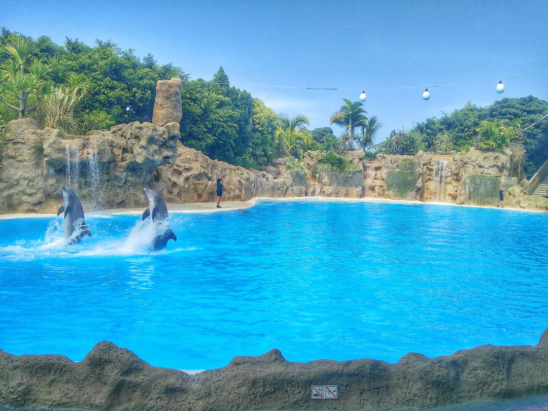 Dolphins Loro Parque Enjoy the Adventure