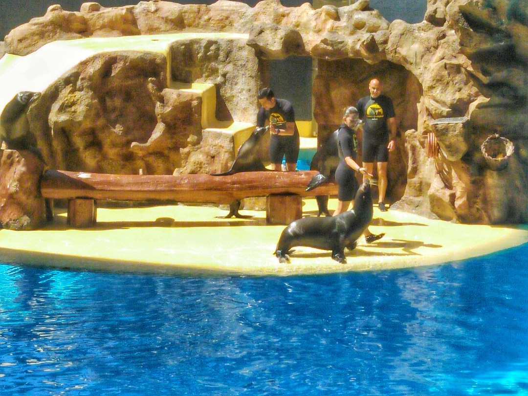 Sea Lions Loro Parque Zoo Enjoy the Adventure