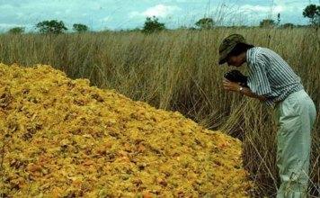 Orange peels dumped in National Park Costa Rica