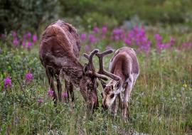 Credit: Emily Mesner Denali National Park and Preserve