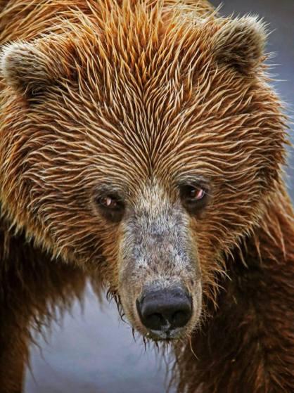 Credit Emily Mesner Denali National Park