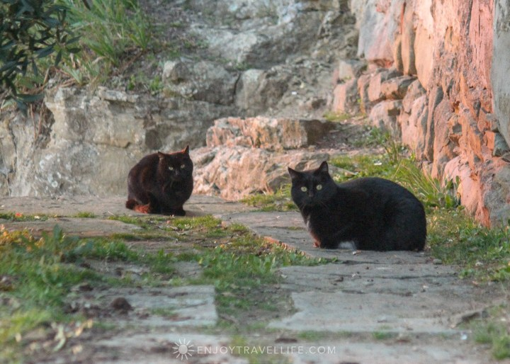 Sunset over Florence Italy - Fiesole two black cats