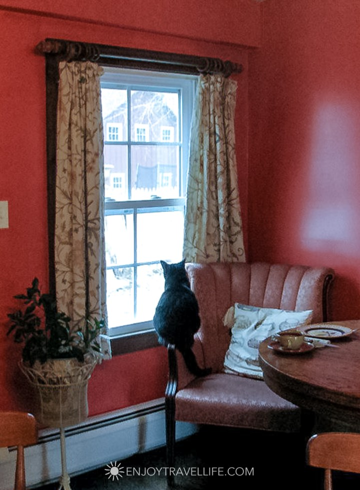 Comfort and Foodie Heaven at The Inn at Sweet Water Farm - cat in window