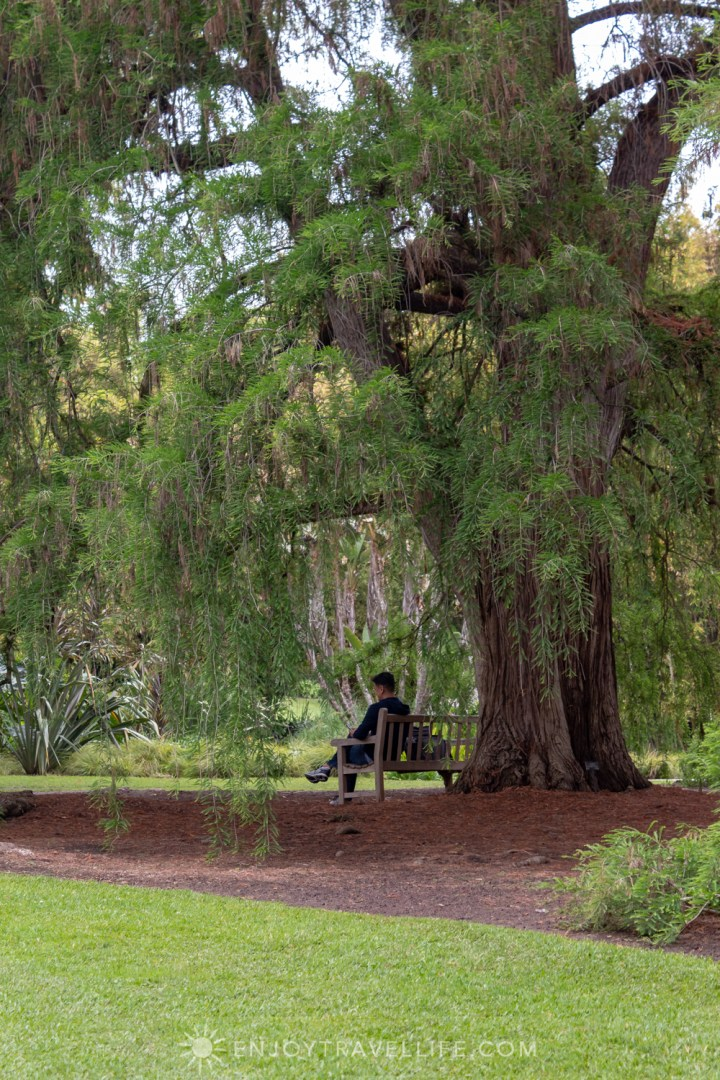 Man Relaxing Under Willow Tree - The Huntington
