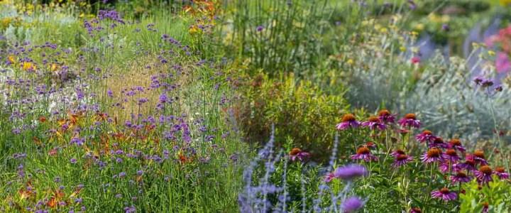 Drought resistant perennials in a garden