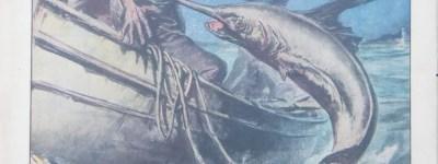 """Massimo Tricano, illustration du """"Domenica del Corriere"""" qui relate l'eperonnage d'un pêcheur par un espadon au large de Milazzo dans le Détroit de Messine"""
