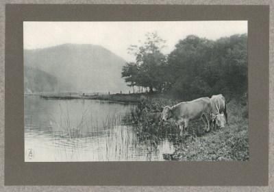 Au Bord du Lac, 1905 - photographe Dr Edward Arning