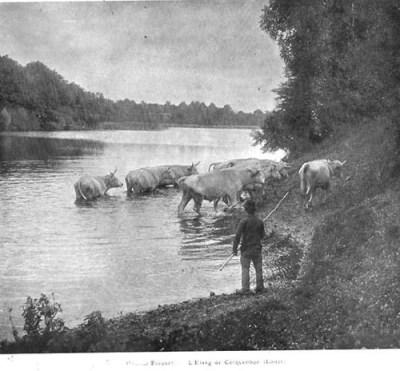 Etang de Corcambon dans le Loiret - photo Maurice Bocquet parue dans l'Illustration