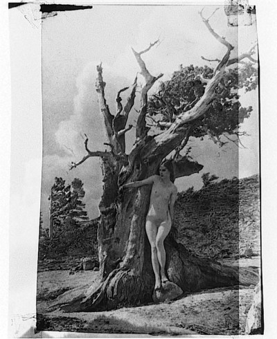 Anne Brigman - The Heart of the Tree, 1926